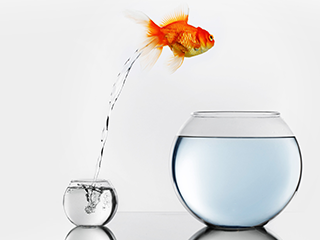 fotolia.com - 81283179 - Gold fish jumping to big fishbowl © yellowj
